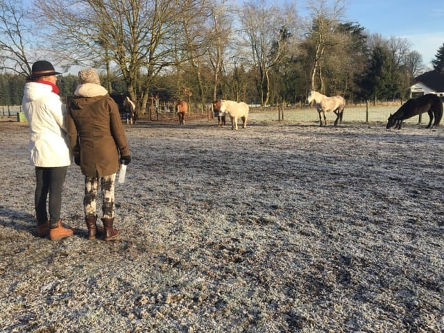 Gemanaged door paarden